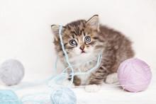 Pretty Kitten Playing With Yarn Ball