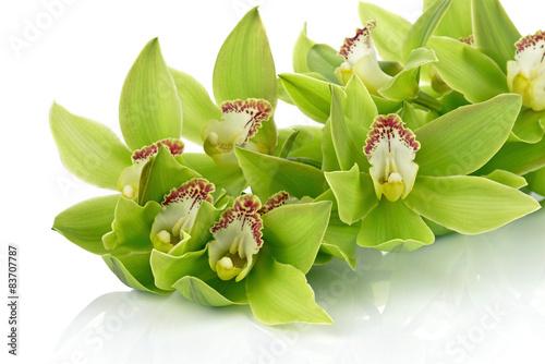 Fotografie, Obraz  Orchidea na białym tle