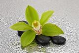 Fototapeta Kamienie - Orchidea na kamieniach bazaltowych