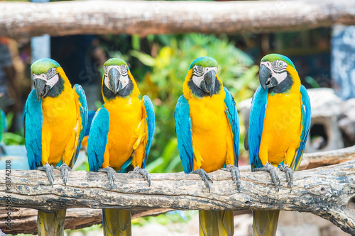 Foto op Canvas Papegaai macaw bird sitting on the perch