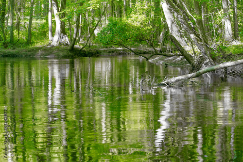 Fotografie, Obraz  cypress forest and swamp of Congaree National Park in South Caro