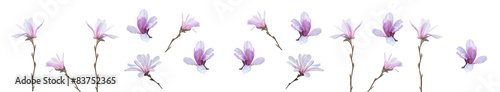 Fototapety, obrazy: Pink magnolia flowers