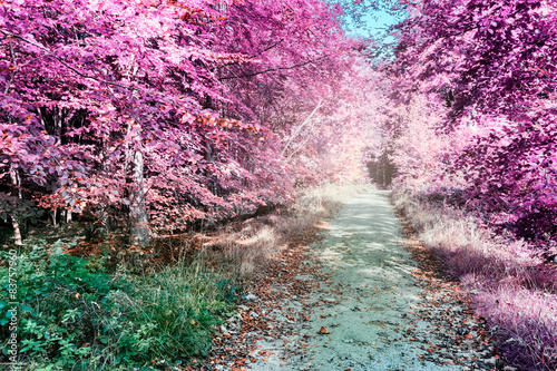Purple infrared forest landscape