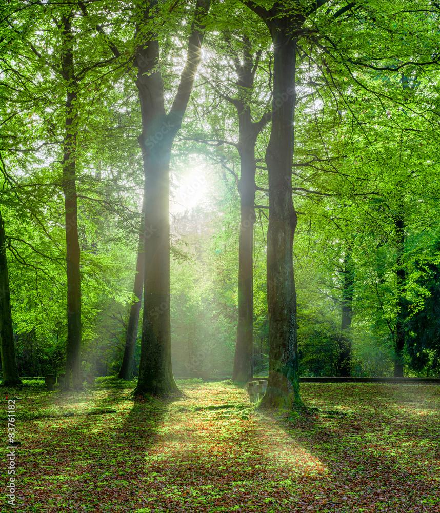 Fototapeta grüner Wald im Sommer mit Gegenlicht