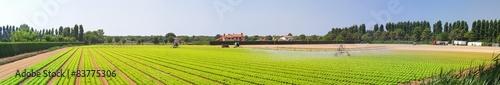 Foto auf Gartenposter Landschappen Panoramic salad field