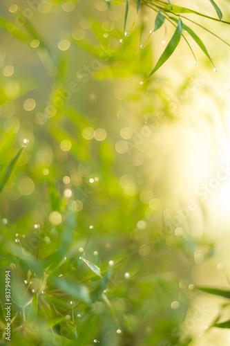 Poster Jaune Twinkling lights blurred natural bokeh (leaf bamboo)