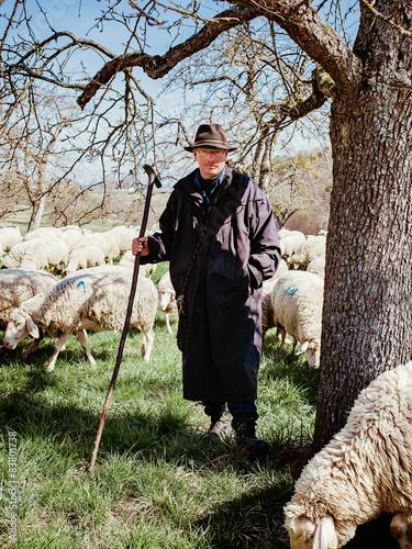 Fotografie, Obraz  Schäfer mit Schafen unter Baum
