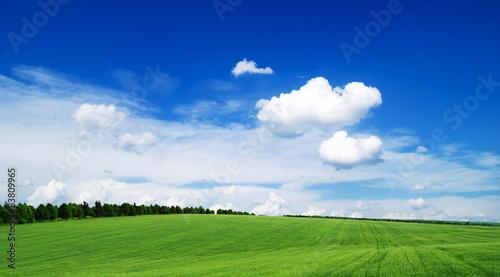 Deurstickers Platteland field