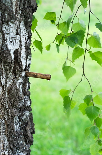 tube and drop of birch sap