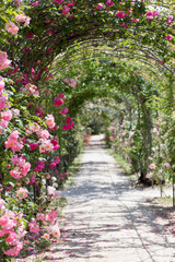 Panel Szklany Róże fantastic luxuriant rose garden path