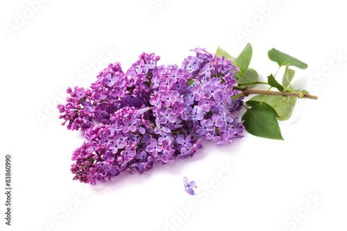 Papiers peints Lilac Spring flower, twig purple lilac. Syringa vulgaris on white back
