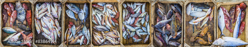 Keuken foto achterwand Vis Fresh fish at a market in a Mediterranean port, collage