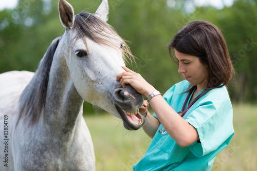 Veterinary on a farm - 83884709