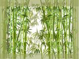 Fototapeta Sypialnia - green bamboo overgrowth illustration