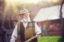 Old Farmer With Pitchfork In His Backyard