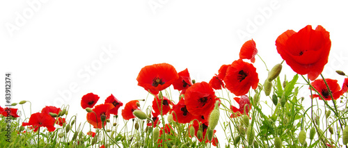 Foto op Canvas Klaprozen red poppy