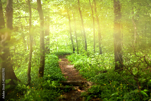 Wall Murals Forest Footpath in forest with sunlight