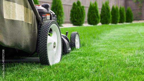 Fotografia Lawn mower cutting green grass in backyard, mowing lawn