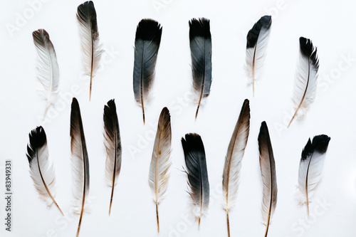 Feathers of the bird