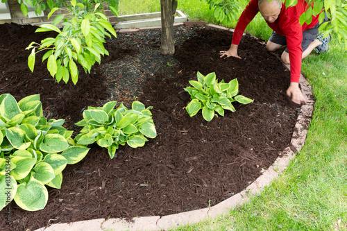 Fototapeta Gardener doing mulch work around the house