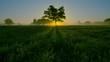 Drzewo wśród traw