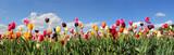 Fototapeta Tulips - Tulpenfeld Panorama - verschiedene Sorten