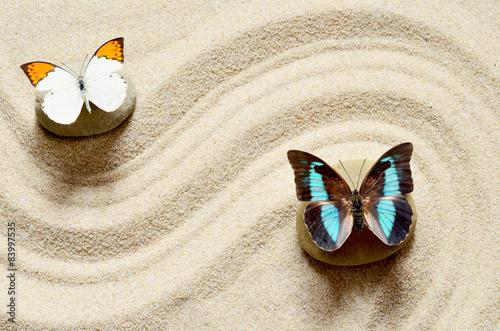 motyl-na-piasku