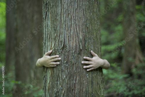 Valokuva  Children are hiding in the big tree