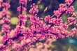Pink blossom tree. Natural spring background