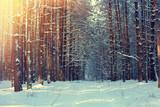 Droga w lesie zimą