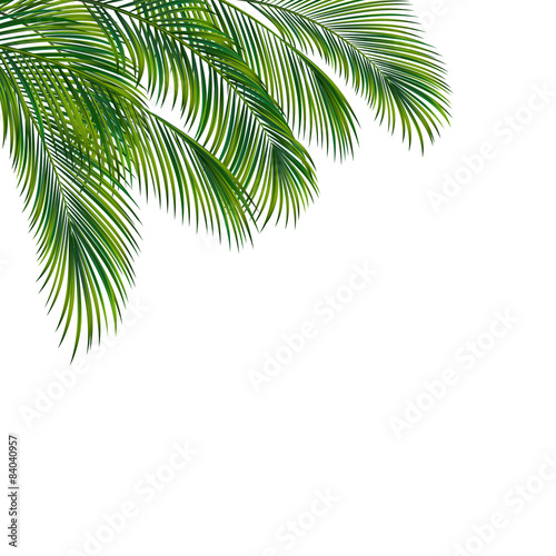 Palm tree foliage isolated on white background Wall mural