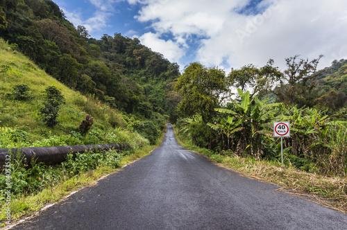 droga-w-lesie-deszczowym
