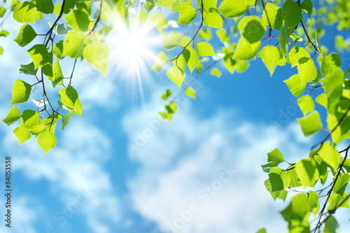 Cadres-photo bureau Bosquet de bouleaux Spring natural background with young birch leaves