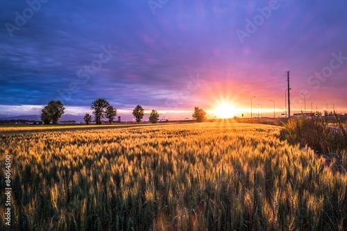 Valokuva  Campo di grano al tramonto