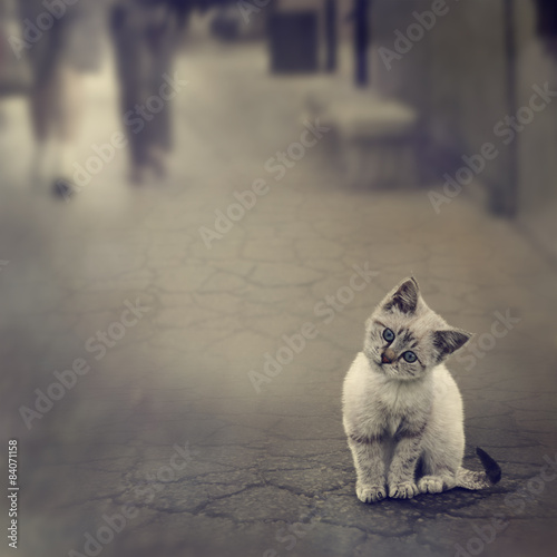 Foto auf Acrylglas Katze Kitten On The Street