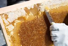 日本の養蜂