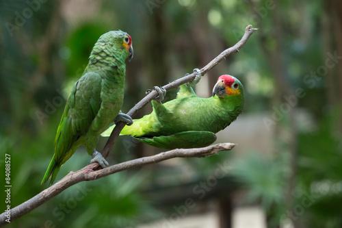 Fotografija parrot bird