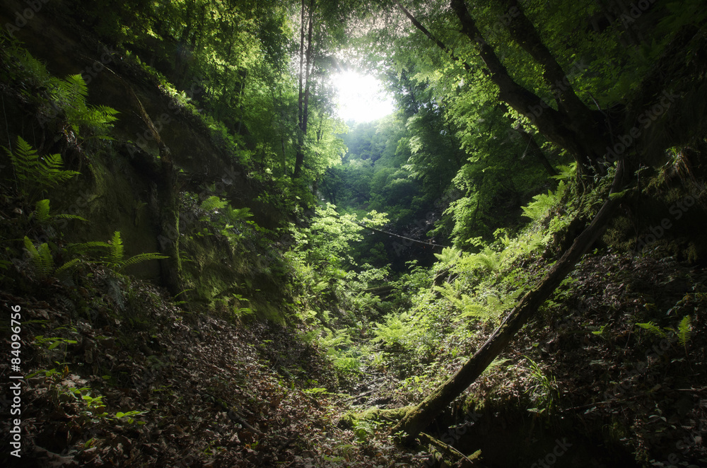 Fototapety, obrazy: wilderness landscape with green vegetation
