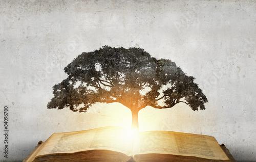 Fotografía  Reading develops imagination