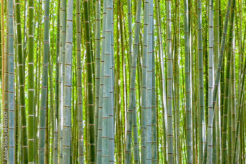 Poster Bamboo bamboo background in nature at day