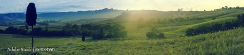 Fototapeta toskania, panorama, winnica, val d'orcia, włochy, sierpień, cyprysy, Tuscany, vineyard, Val d'Orcia, Italy, August, cypresses obraz