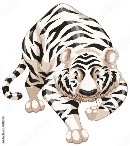 Fototapety, obrazy: White tiger