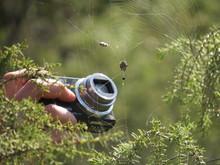 Appareil Photo Shootant Une Araignée Dans Sa Toile