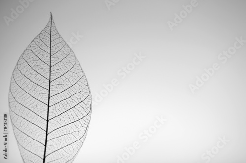 Poster Squelette décoratif de lame Skeleton leaf on grey background, close up