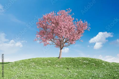 kwitnac-czeresniowego-drzewa-na-lace-przeciw-niebu