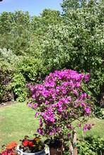 Finally Summer Flowering, Beau...