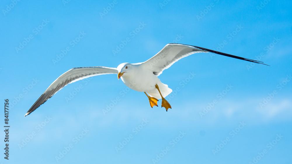 Möwe im Flug bei sonnigem Wetter