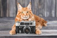 Cat, Photography, Photo.