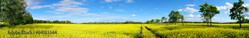 Montage in der Fensternische Landschappen rapeseed field panorama