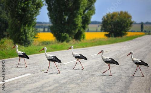 storks - 84205923